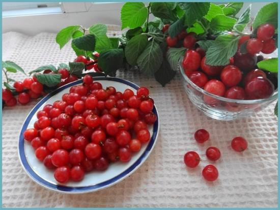 рецепты заготовок из войлочной вишни