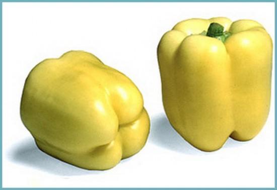 сорта перца для выращивания в теплице