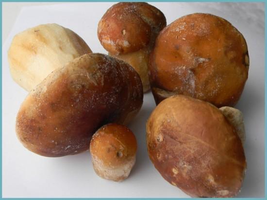 заморозка грибов на зиму