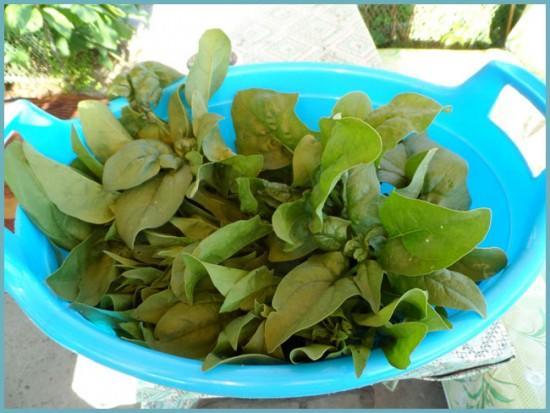 как высушить шпинат на зиму