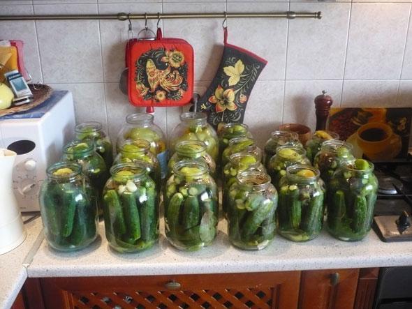 заготовка огурцов на зиму