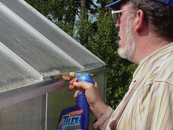обработка теплицы от фитофторы