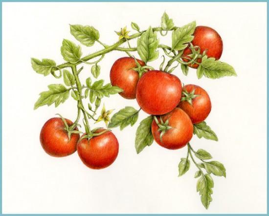 зачем формировать кусты томата