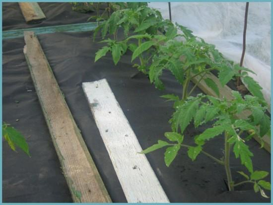 геотекстиль для грядок томатов