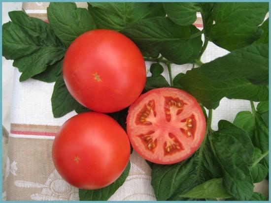 сорта томатов. устойчивые к фитофторе