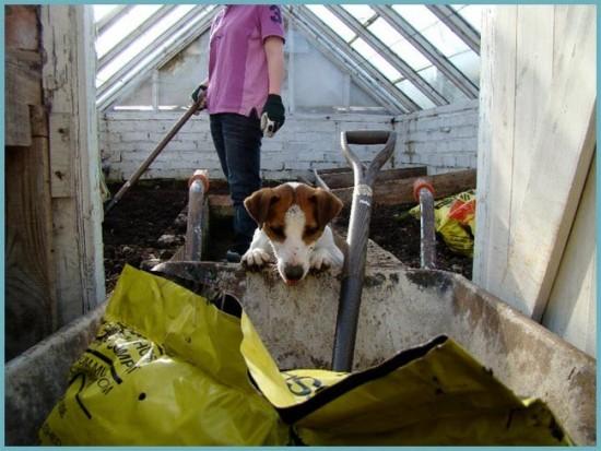 подготовка почвы в теплице к зиме