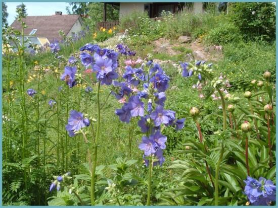 место для синюхи в саду