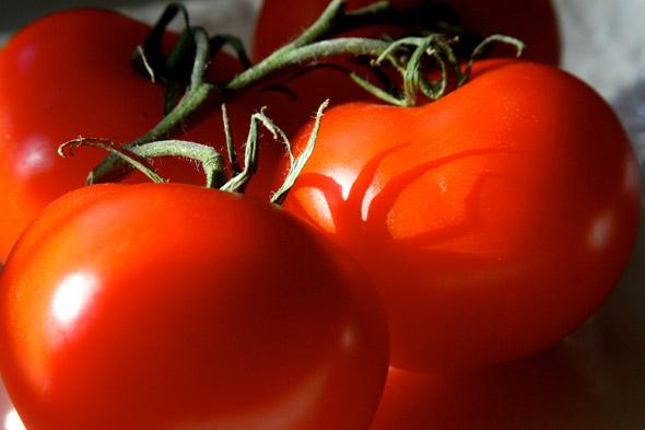 сорта томатов. устойчивые к фтофторе