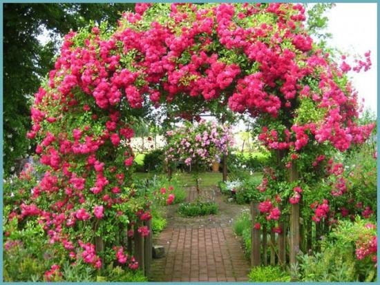 морозоустойчивость плетистых роз