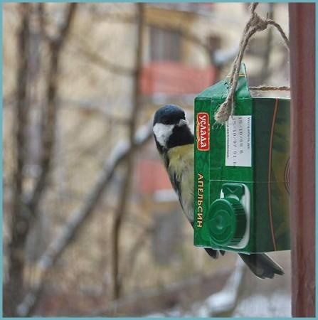 кормушка для птиц из пакета от сока