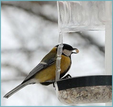 как правильно сделать кормушку для птиц из пластиковой бутылки