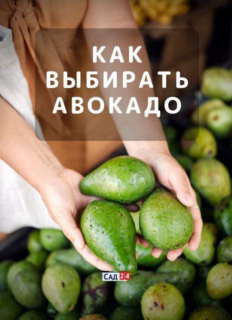 Как правильно выбирать авокадо в магазине