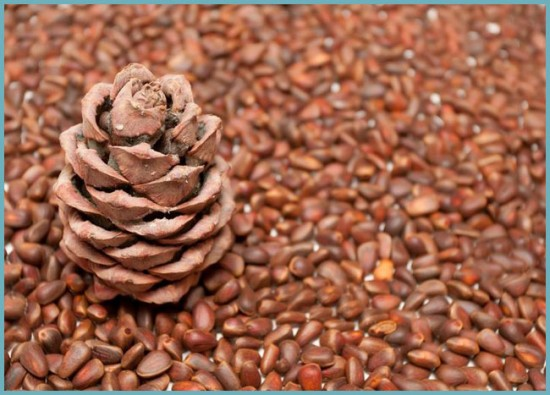состав кедрового ореха