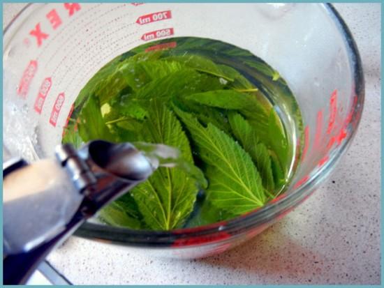 лечение кожи листьями малины
