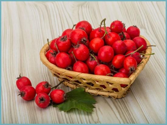 как собирать плоды боярышника