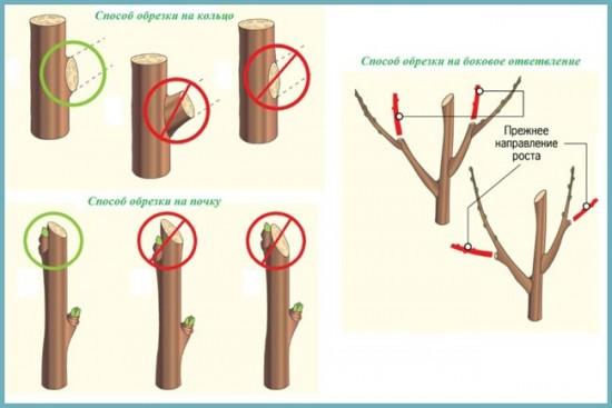 как срезать ветви яблони