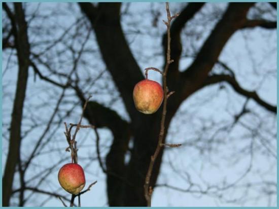 зачем обрезать яблоню