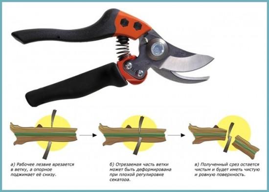 инструмент для обрезка дерева