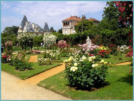 место для посадки парковой розы