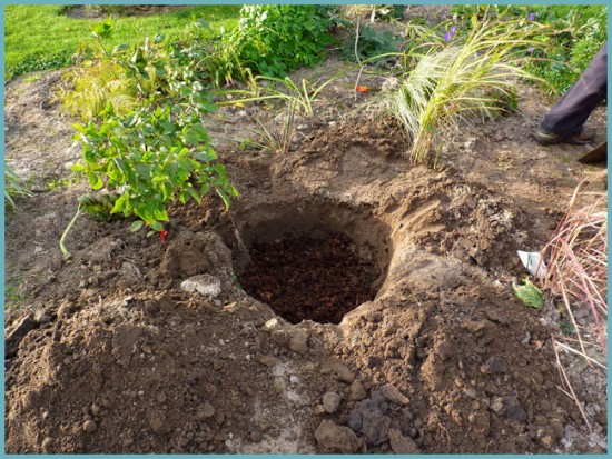 как посадить рододендрон