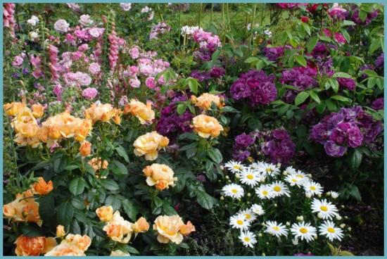 место для посадки розы