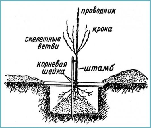 место для посадки вишни