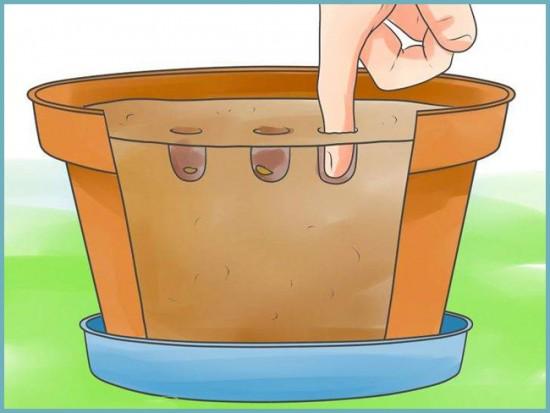 как посадить апельсин