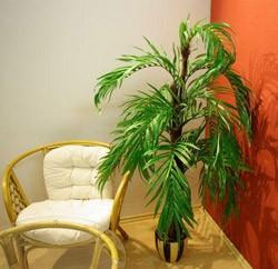 выращивание кокосовой пальмы