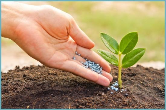 в чем польза азота для растений