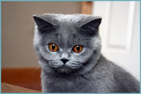 какой домик сделать кошке