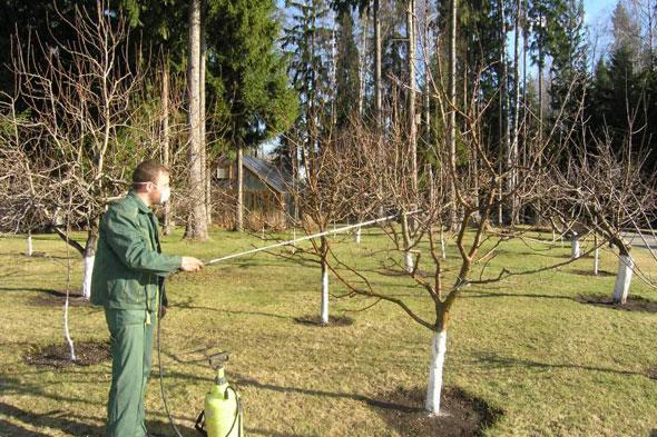 Весенняя обработка деревьев