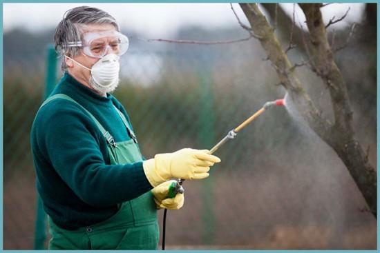 когда обрабатывать деревья