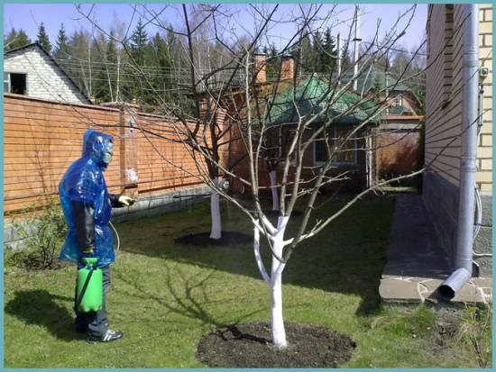 уход за деревьями весной