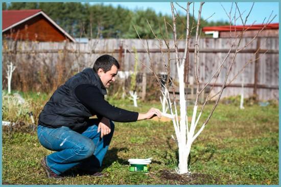 как белить деревья