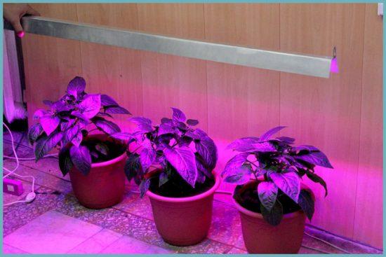 преимущества фитоламп для растений