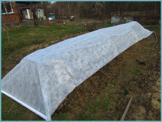 агроволокно для защиты от морозов