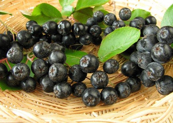 Заготовки из черноплодной рябины
