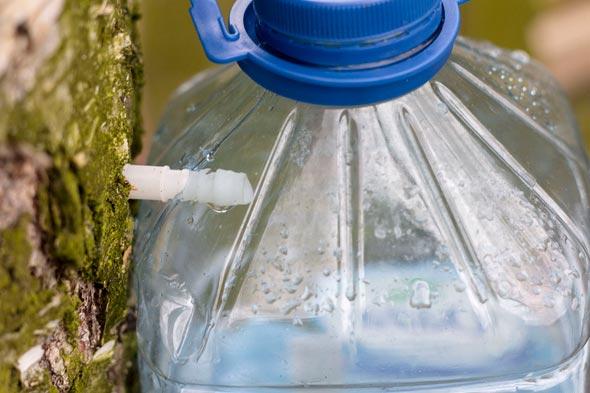 Как закрыть сок березы