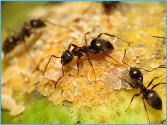 вред муравьев
