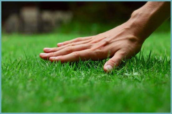как создать газон