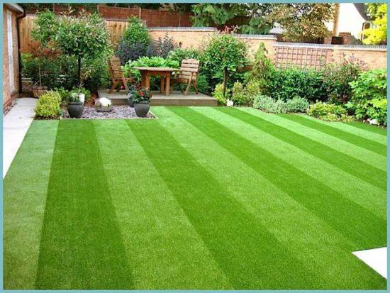 качество газона