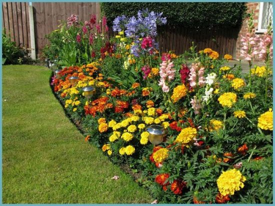 как подобрать цветы для клумбы
