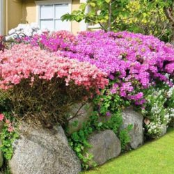 Цветники из камня