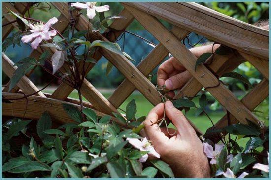 решетка для цветов