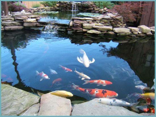 какую рыбу разводить на даче