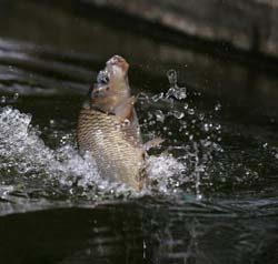 Пруд для разведения рыбы на даче