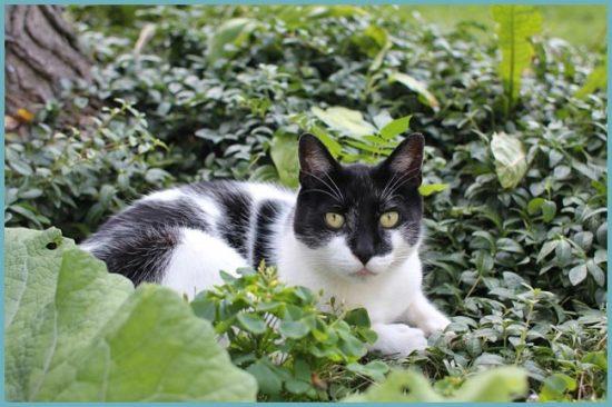 вред от кошек в саду