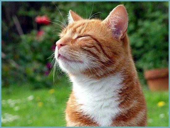 отпугнуть кота от грядок