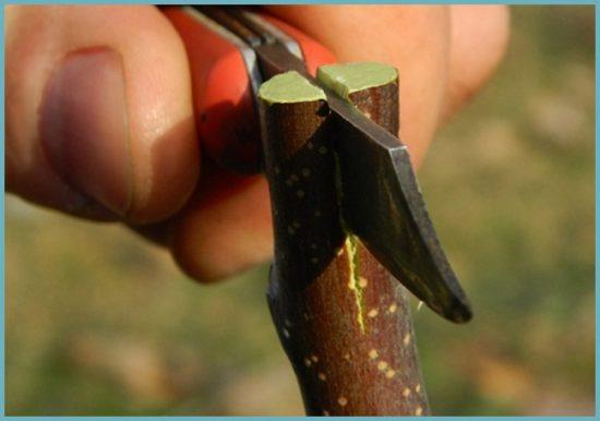 методы прививки деревьев