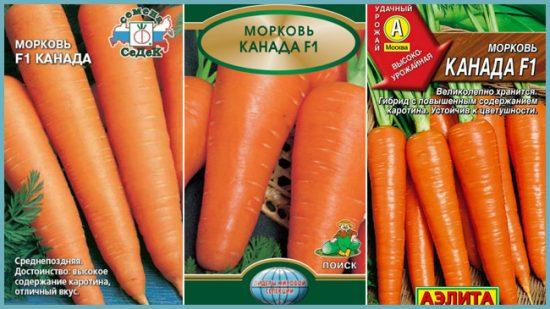 сорт моркови